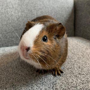 Meet Bertie